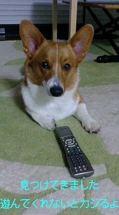 リモコン犬
