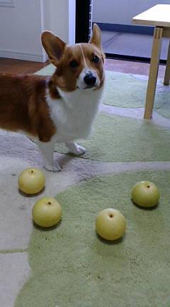 梨が届きました♪