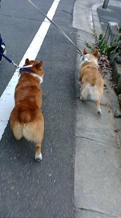 散歩も楽しさ倍増
