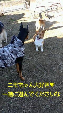 ニモちゃん