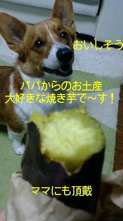 焼き芋で〜す