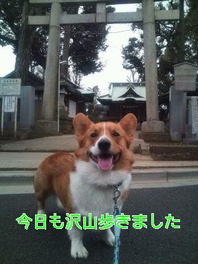テケテケコギさん