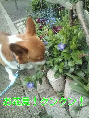事前お花見