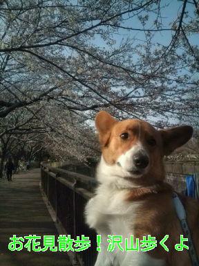 お花見散歩!