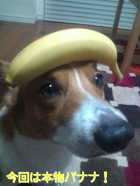 バナナであらよっと!
