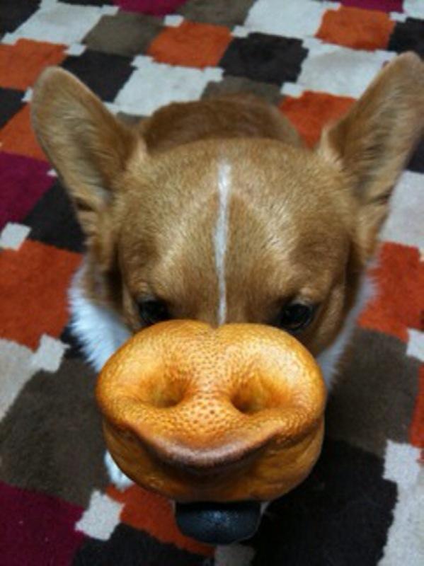 鼻の上に鼻