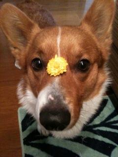 食べれるの?