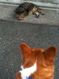 のびのびネコちゃん
