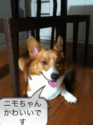 女優ニモちゃん