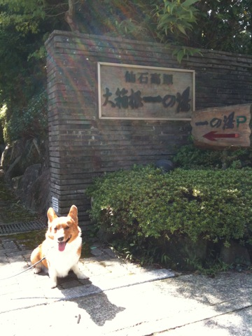 仙谷高原 大箱根一の湯