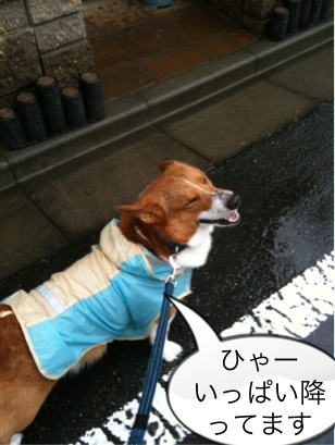 雨雨てすよ