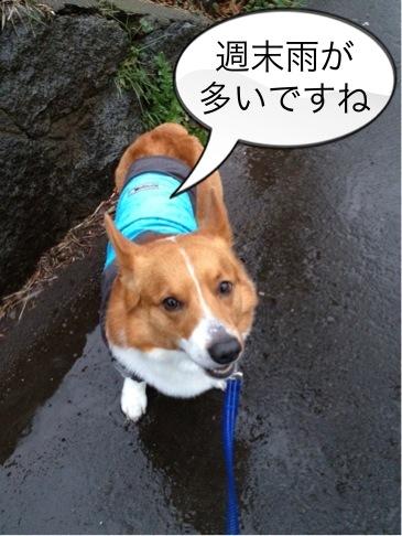 春雨ですか?