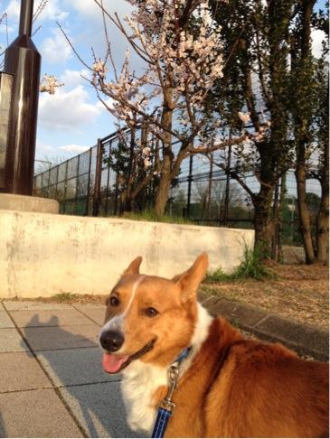 梅は咲いたよ