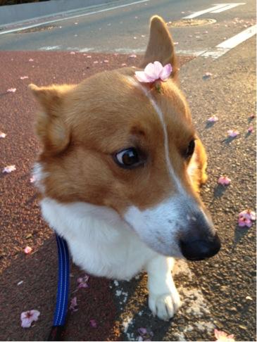 お花onお鼻