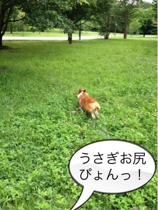 芝生大好き