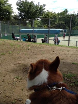 テニスの応援