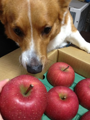 オリオンリンゴ
