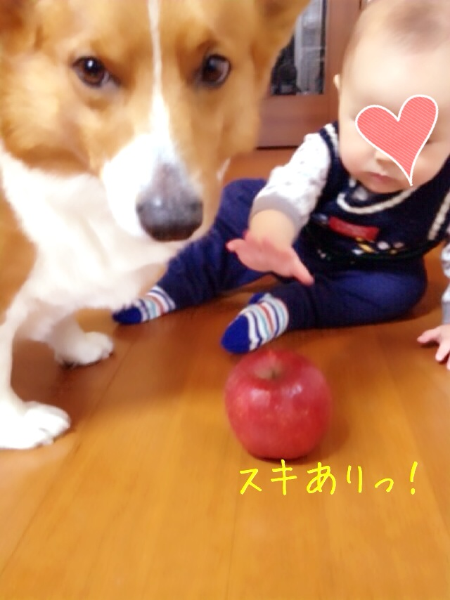 リンゴ争奪戦