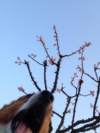 梅とコギコギ
